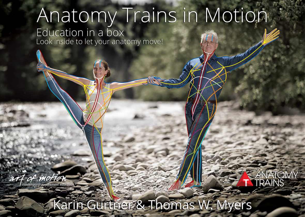 ANATOMY TRAINS IN MOTION FLASHCARDS